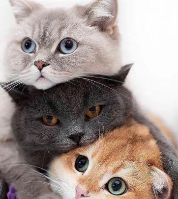 مفهوم رفتار گربه من چیست؟ توضیح کامل رفتار گربه ها به زبان ساده