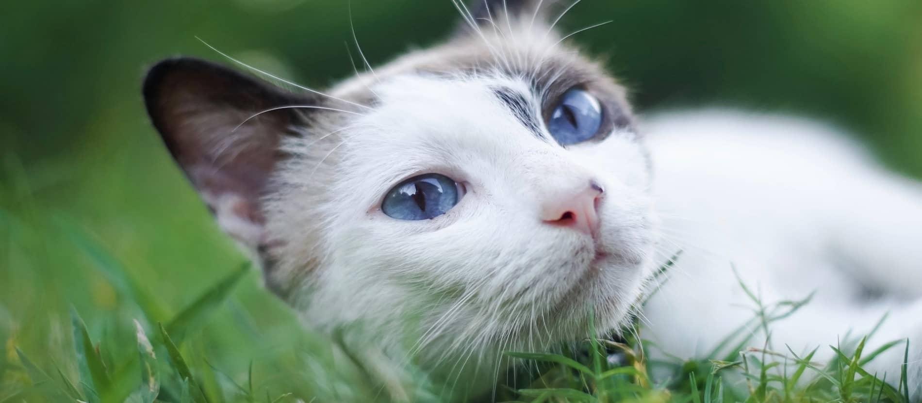 مفهوم رفتار گربه