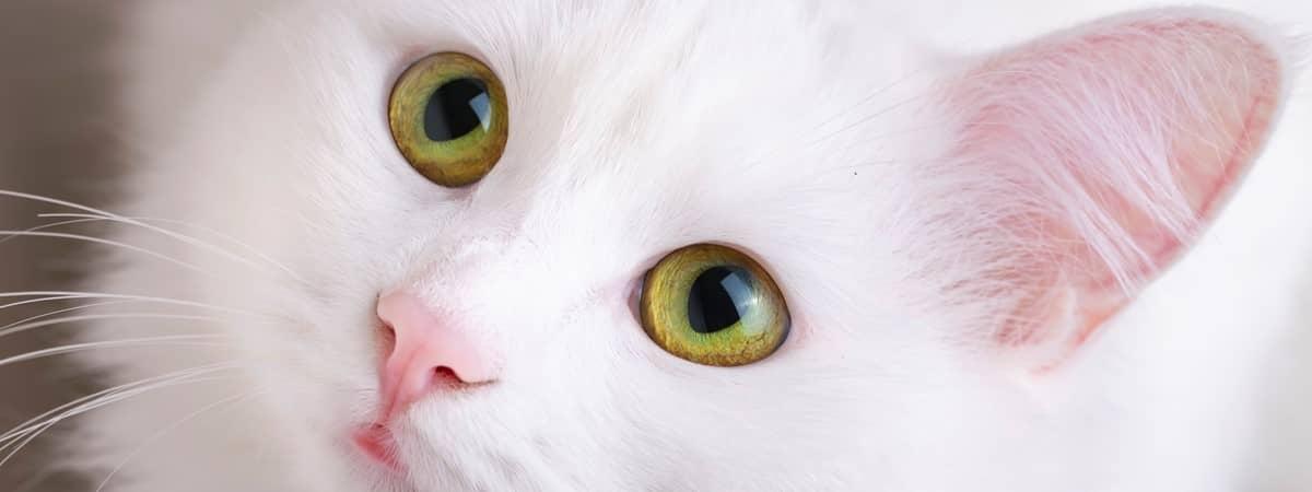 مفهوم رفتار گربه1